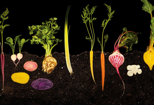 Food Like You Have Never Seen If Before: Photography of Modernist Cuisine