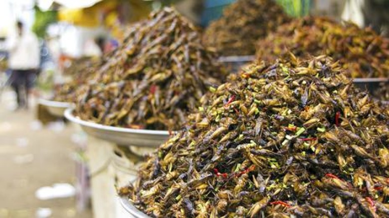 Could insects be the wonder food of the future?