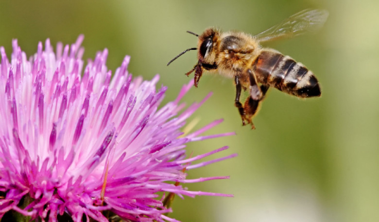 Bees: SumOfUs Sued?
