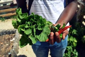Urban Farming in Cape Town