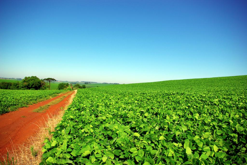 Brazil: Contrasting Agricultural Landscapes