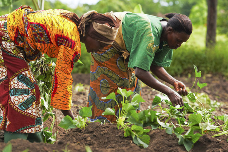 How can food security in Africa be achieved?