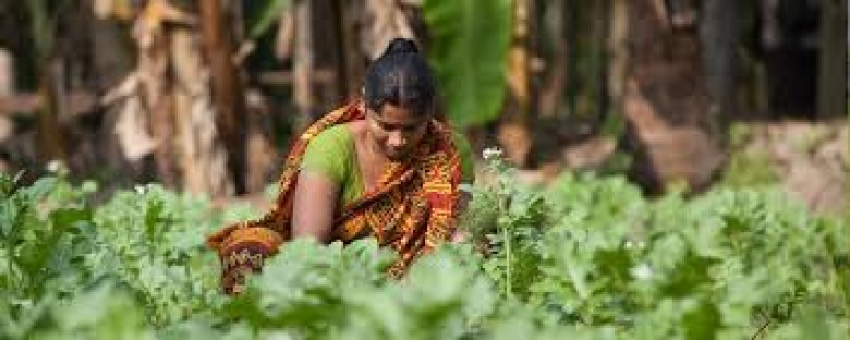 The nexus between agriculture and nutrition