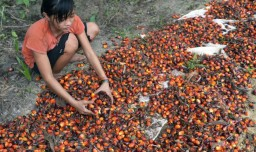 palm-oil-child-labour