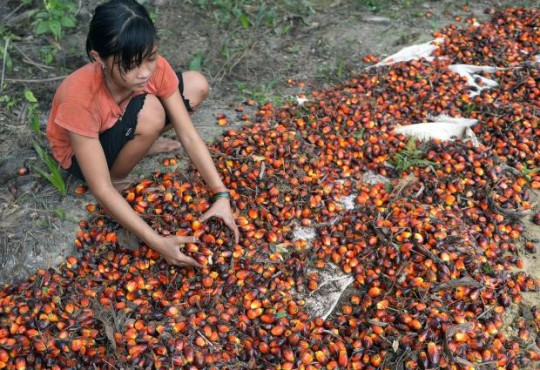 Palm Oil: Global brands profiting from child and forced labour