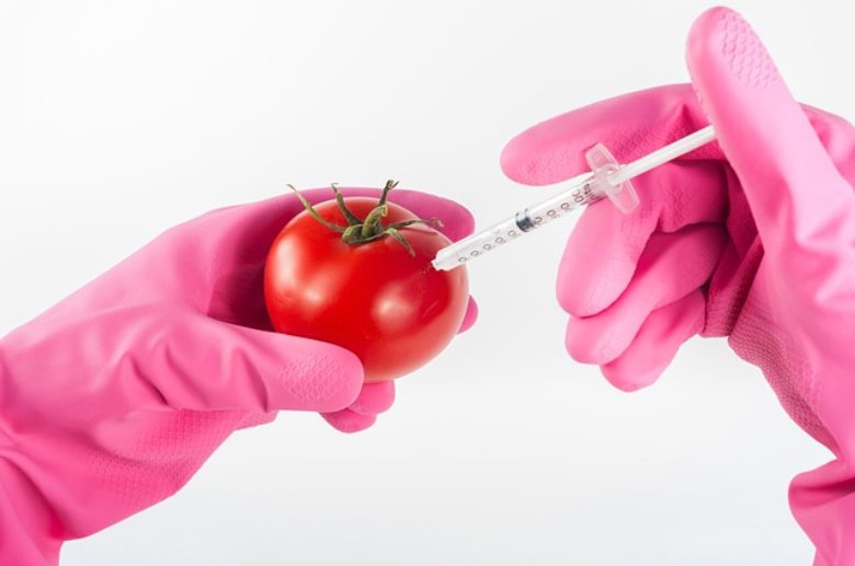 In days Europe could outlaw GM crops, or it could open the flood gates
