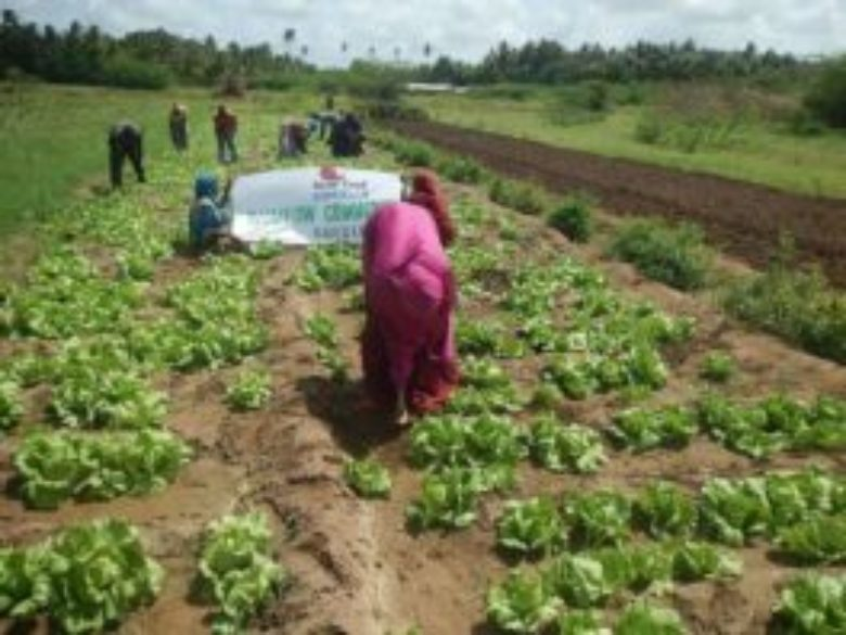 Slow Food in Somalia: An expanding network of gardens