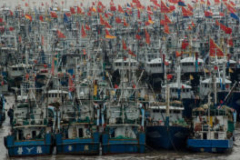 Report: China wants fish, so Africa goes hungry