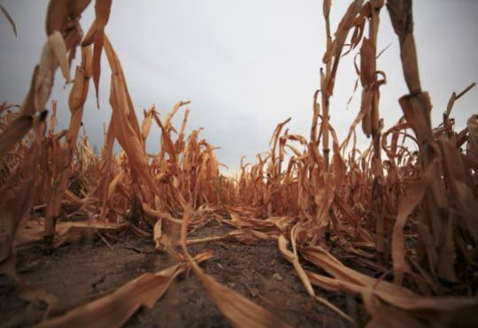 Climate change could heighten risk of global food production shocks