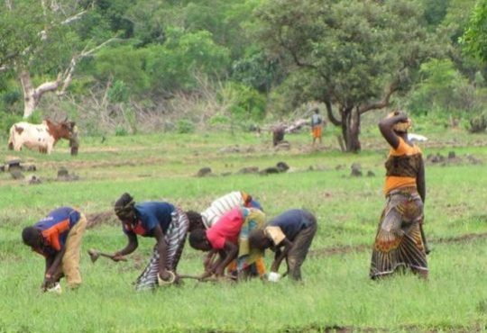 Why it's important to recognize multiple food systems in Africa