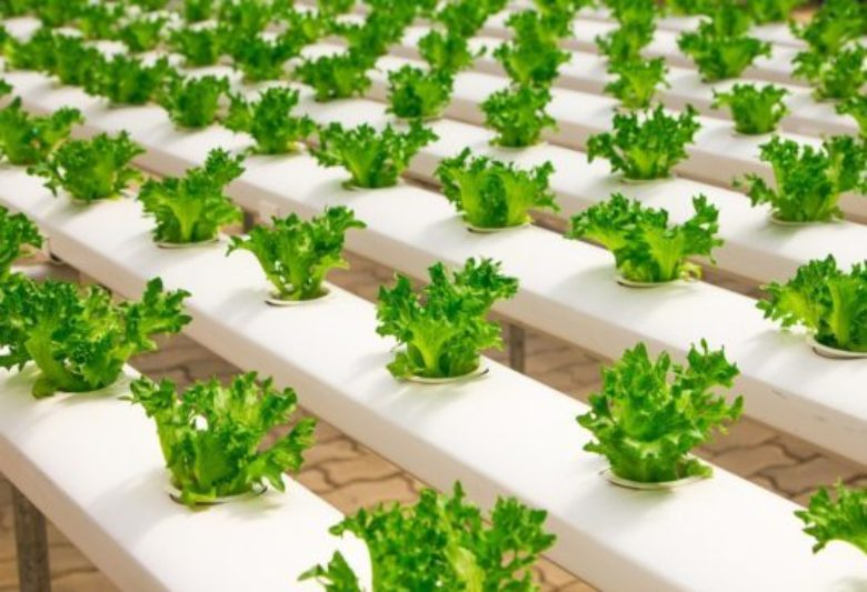 Why we need to rethink how we produce food