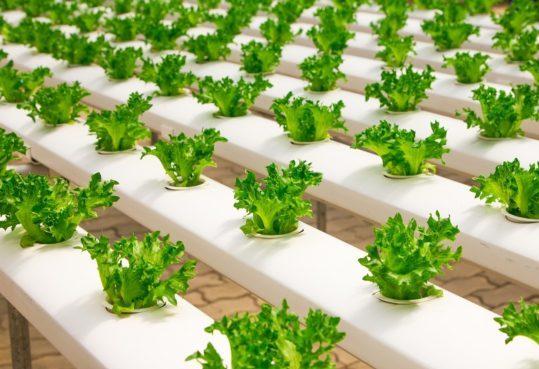 greenhouse-2139526_1280_news_featured-e1540918517774.jpg