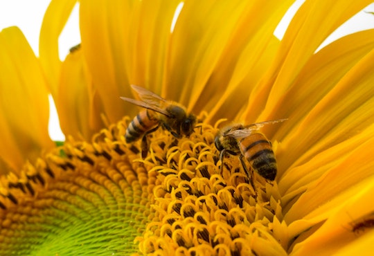 Killer Pesticides Decimating Bee Populations in Brazil