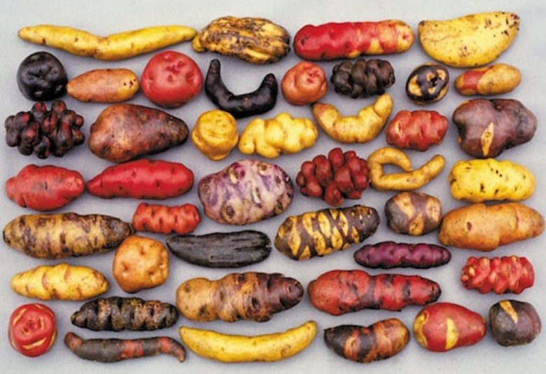 How Peru's potato museum could stave off world food crisis