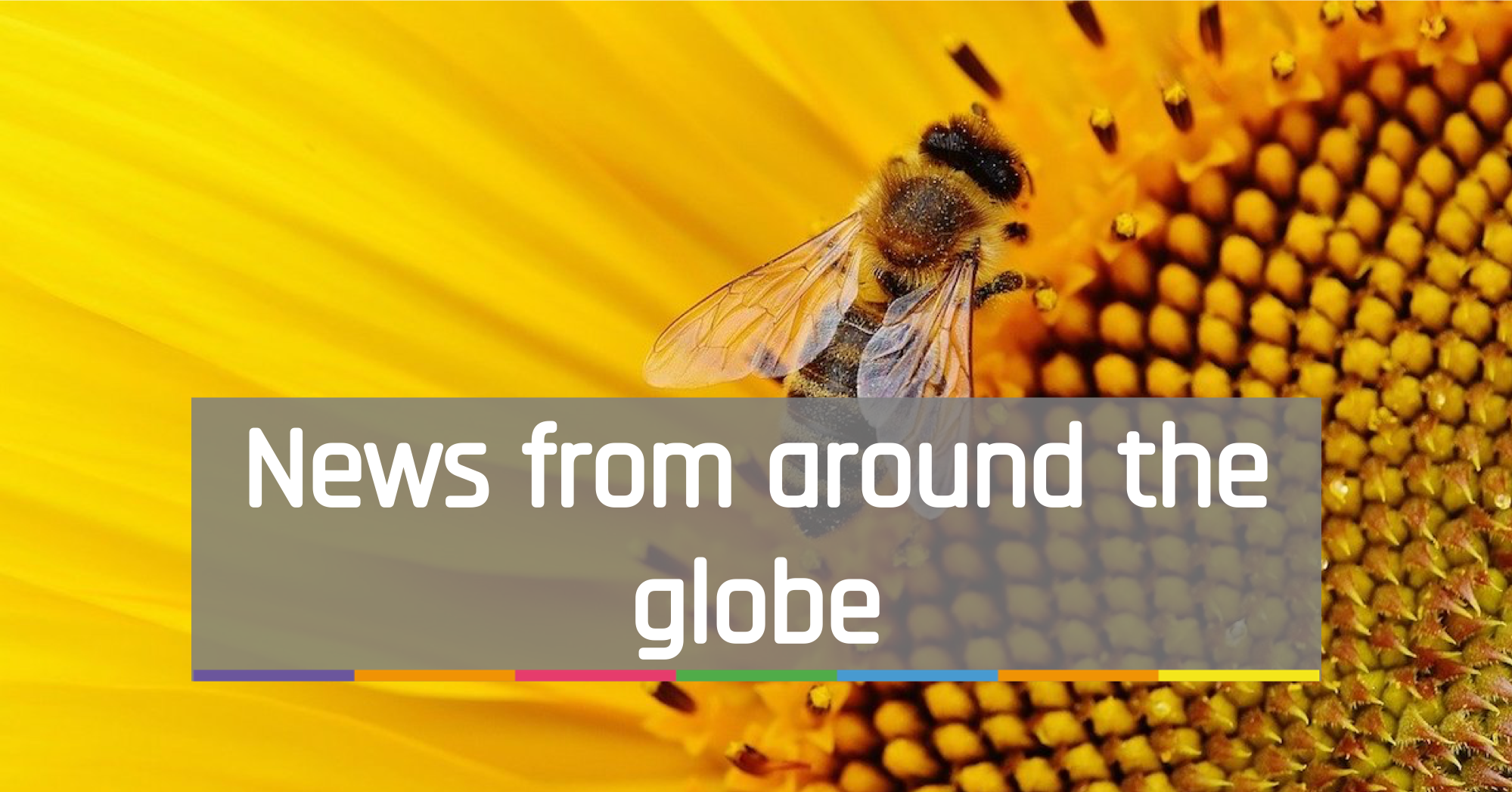 News from around the globe