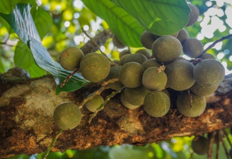 Bringing native plants back to indigenous diets in Indonesia