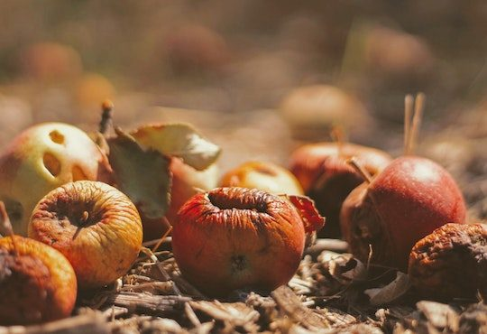 Food waste prevention is a UN sustainability goal