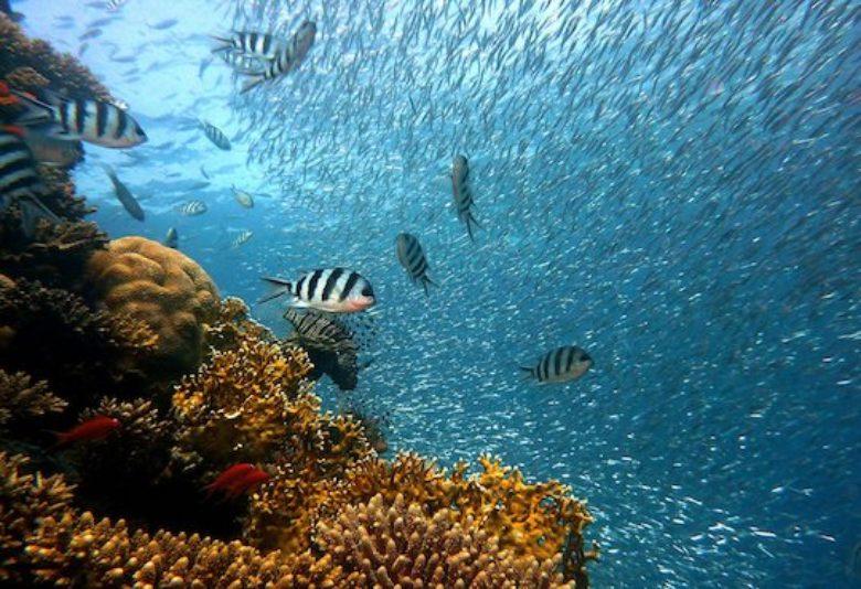 Biodiversity at risk, threatens human survival, UN forum hears