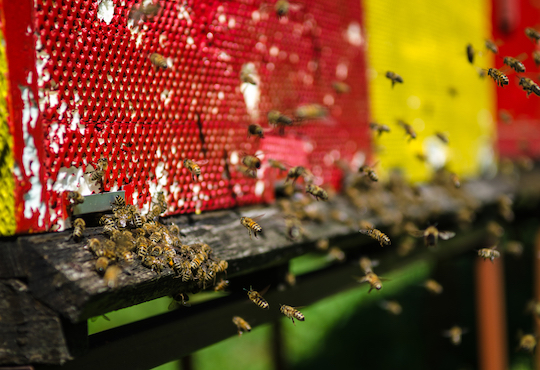 The fourth observance of World Bee Day